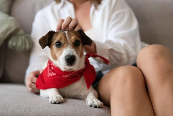 Ugrabitev hišnih ljubljenčkov bo v Veliki Britaniji poslej kaznivo dejanje