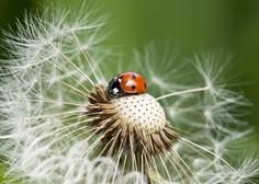 Invazivne vrste in podnebne spremembe: Od rastlin in živali do gliv in bakterij!