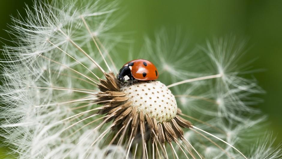 Invazivne vrste in podnebne spremembe: Od rastlin in živali do gliv in bakterij! (foto: profimedia)