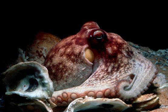 Tako je nek Dalmatinec s svojimi golimi rokami ujel hobotnico