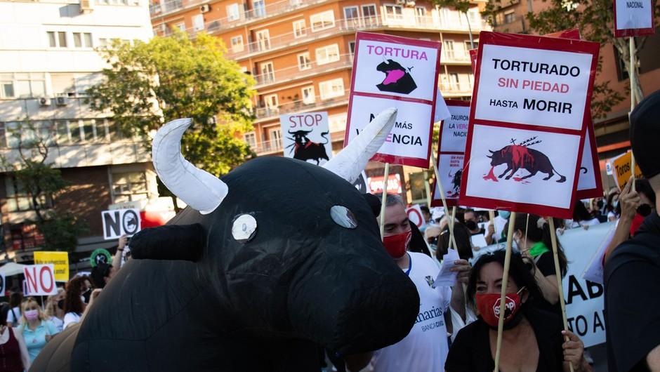 »To ni umetnost, to ni kultura!« V Madridu glasni protesti proti bikoborbam (foto: Profimedia)