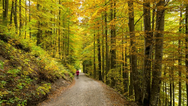 Priporočila za pohodništvo v jeseni: da bo vaš izlet v gorski naravi lepši! (foto: profimedia)