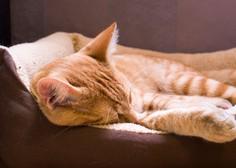 Oranžne mačke utelešajo moč Sonca (in njegovo vitalno življensko energijo)
