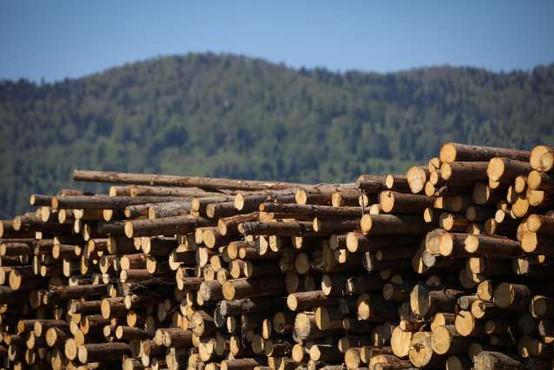 V slovenskih gozdovih lani posekali za petino manj lesa
