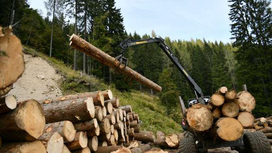 Za nakup nove mehanizacije in opreme za sečnjo in spravilo lesa 10 milijonov evrov (foto: Tamino Petelinšek)