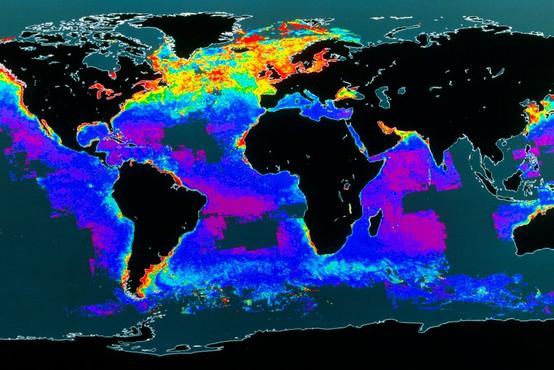 Pozabljena ogljična goba: plankton (razlog, da je človeštvo sploh še tukaj)!
