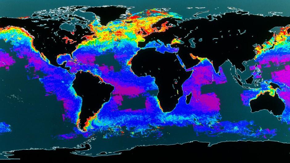 Pozabljena ogljična goba: plankton (razlog, da je človeštvo sploh še tukaj)! (foto: profimedia)