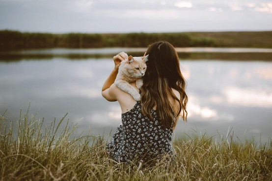 Mačke se na skrbnike enako močno navežejo kot otroci in psi, kažejo študije