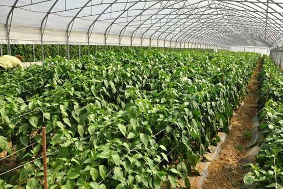 Predlagane smernice EU bi zmanjšale pridelavo hrane in vplivale na njeno kakovost